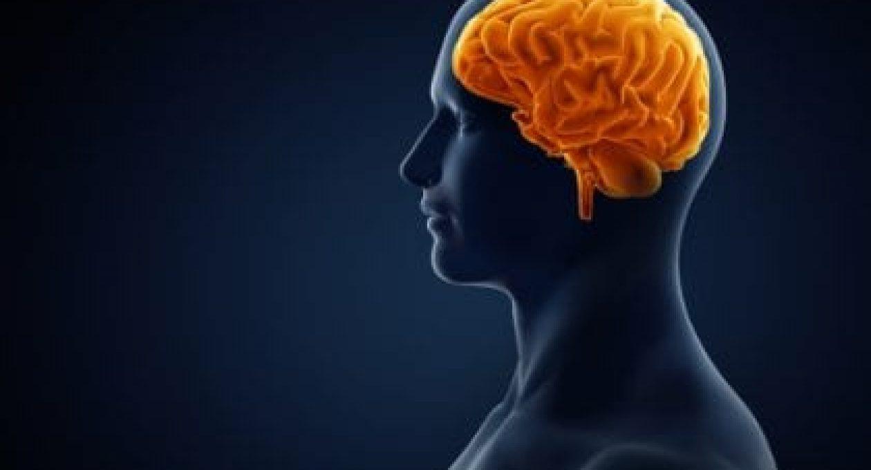 Smart Ingredients for Brain Health