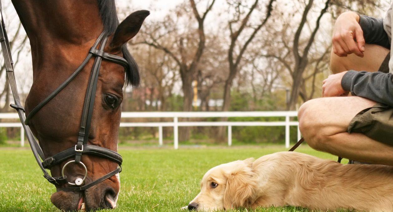 News Release: Evolva makes Veri-te<sup>™</sup> resveratrol available for our companion animals.